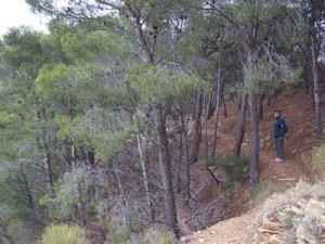 Sendero entre pinares