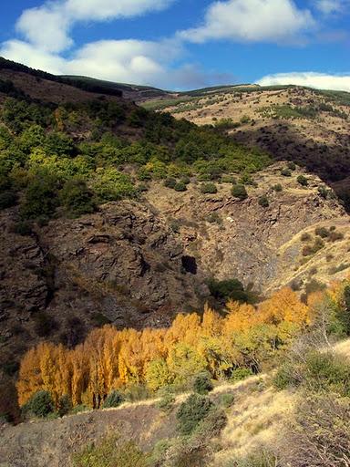 Álamos Río Paterna