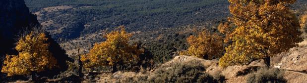 Sendero del Aguadero (PR-A37)