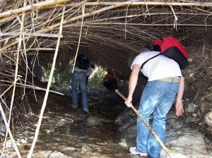 Túnel de cañas