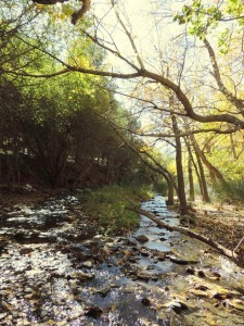 Bosque atravesado por Río Nacimiento