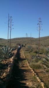 Cañada de San Marcos
