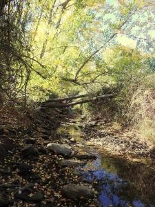 Río Nacimiento entre vegetación