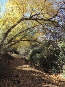 Túnel de vegetación del Río Nacimiento