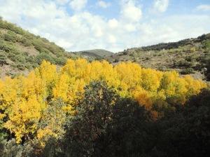 Arbolado del valle de la Ragua