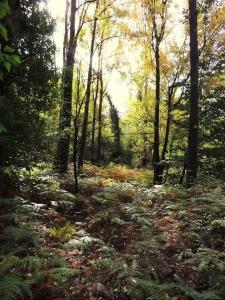 Vegetación del Valle de la Ragua