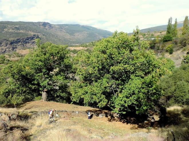 Castaños de Bayárcal