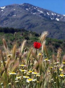 Primavera a los pies de Sierra Nevada