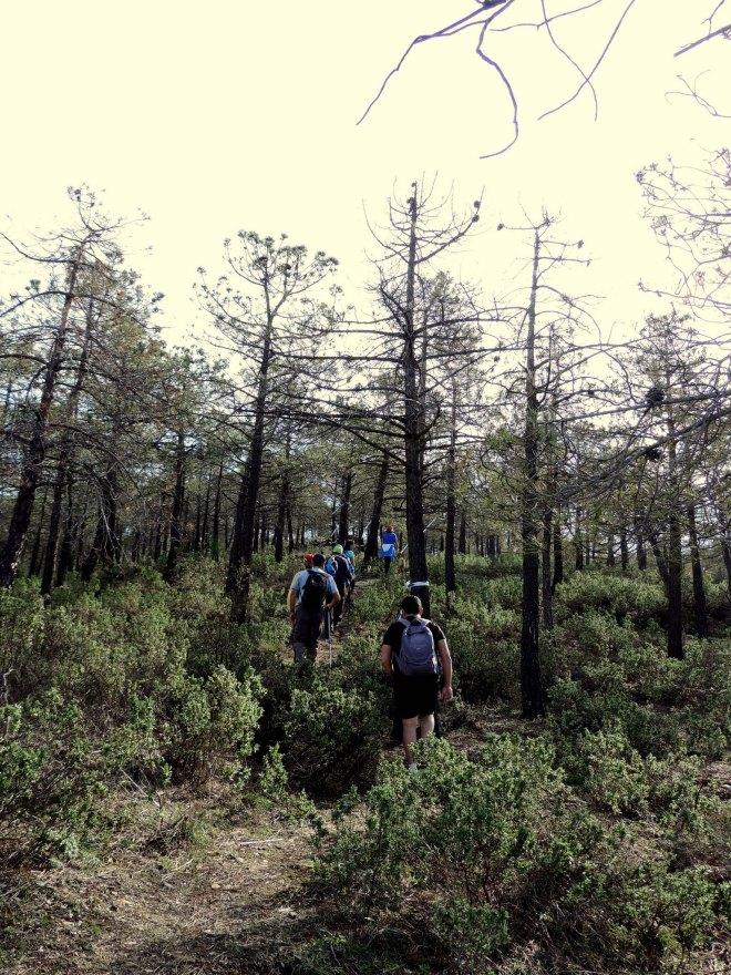 Pinar del Cerro de la Escuela