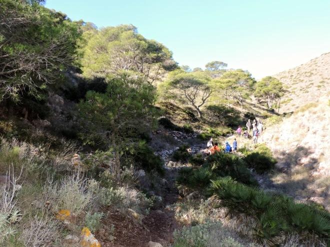 Pinar Relicto del Barranco del Negro