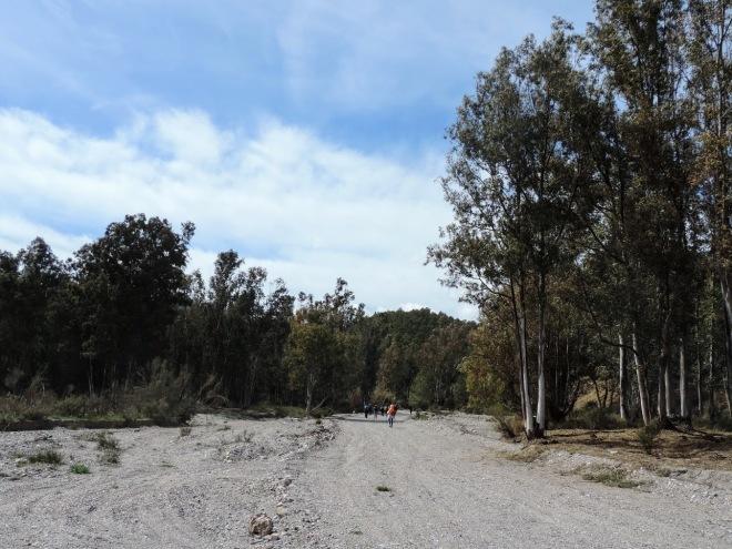 Eucaliptos de la Hoya del Lino