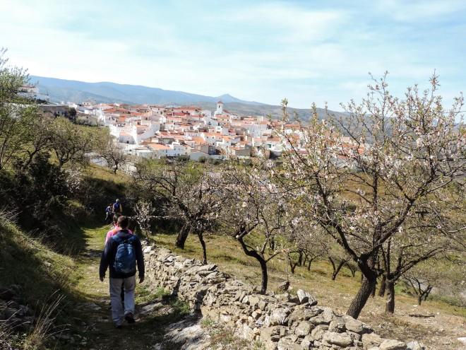 Llegando a Alcudia entre almendros
