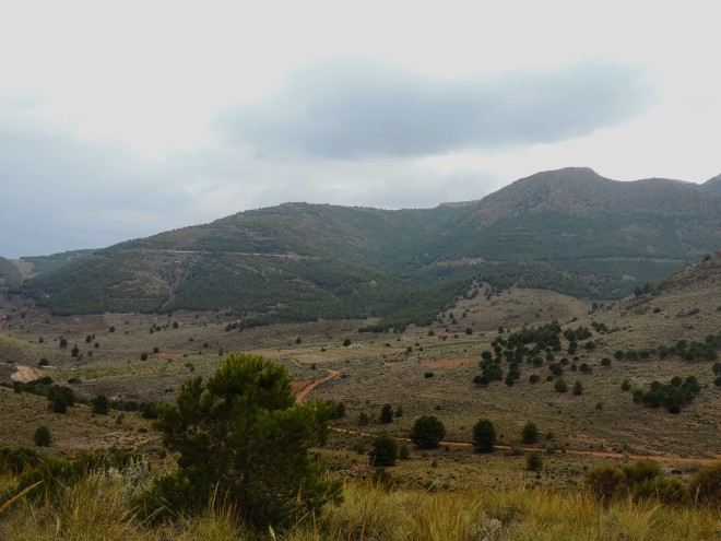 Vista de el Llano del Aljibe