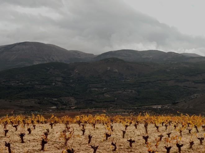 Viñedos. Al fondo Sierra de Gádor