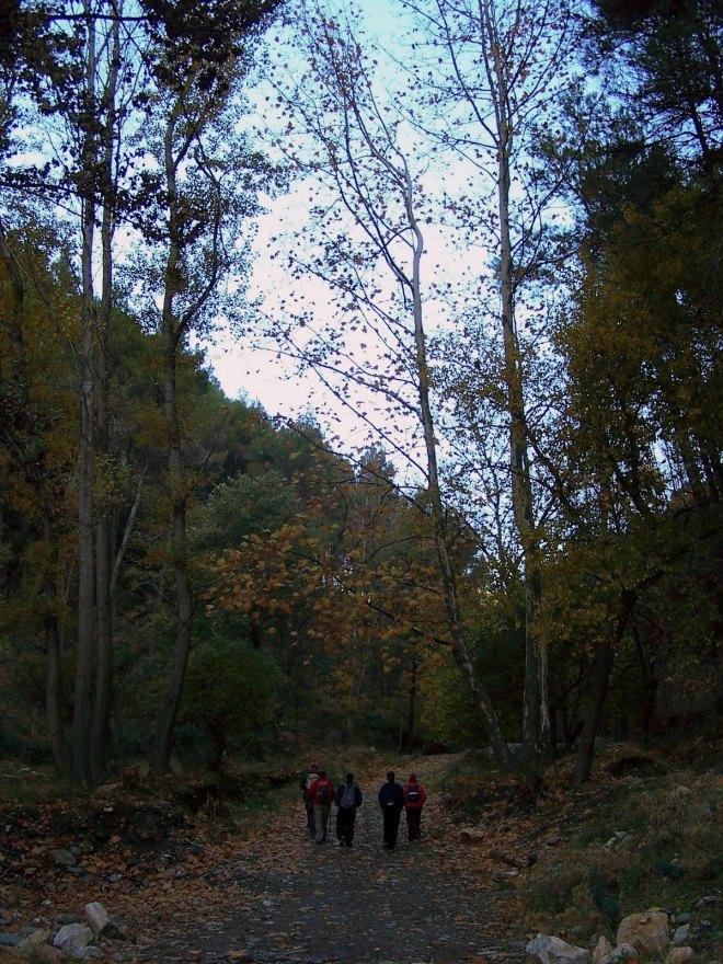 Pista forestal junto al Río Andarax
