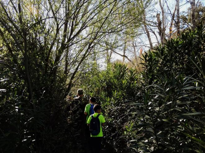 Caminando entre vegetación por la rambla