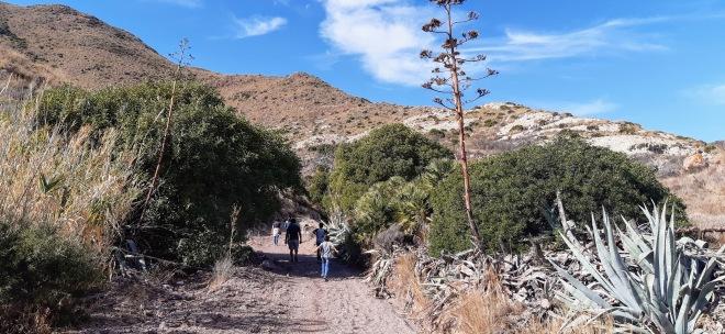 Rambla rodeada la vegetación típica del Parque